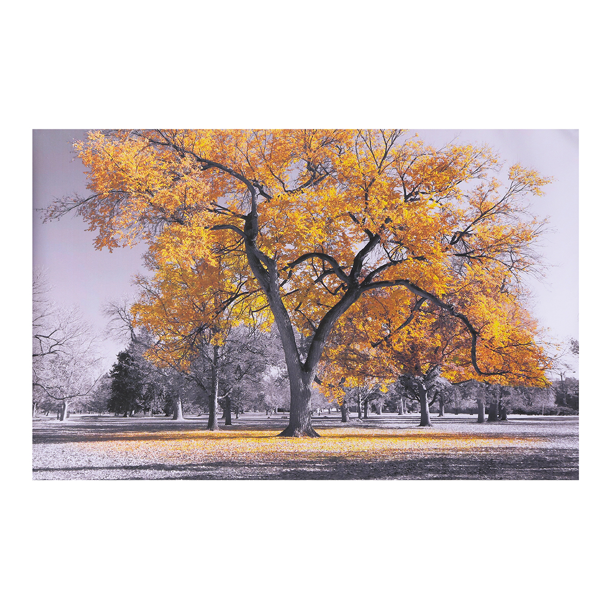 Large Tree Yellow Leaves Black White Nature Canvas Wall Art Picture Print for Home Wall Decoration